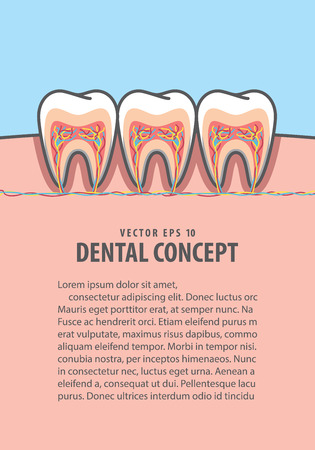 Layout cross-section structure inside tooth illustration vector on blue background. Dental concept.