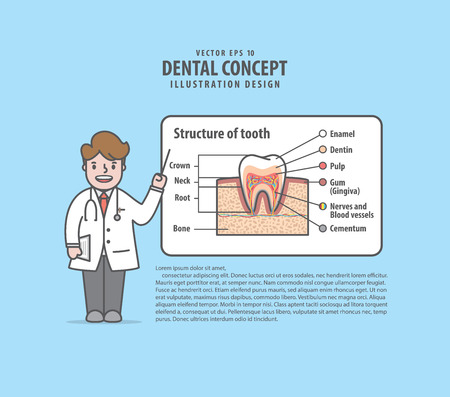 Doctor characters lecture about structure of tooth layout illustration vector on blue background. Dental concept.