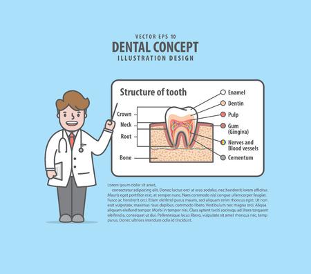 Doktorcharaktere halten einen Vortrag über die Struktur des Zahnlayout-Illustrationsvektors auf blauem Hintergrund. Zahnärztliches Konzept.