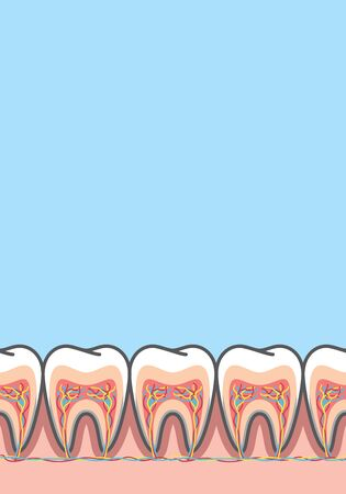 Blank banner Cross-section structure inside tooth illustration vector on blue background. Dental concept. Ilustracja