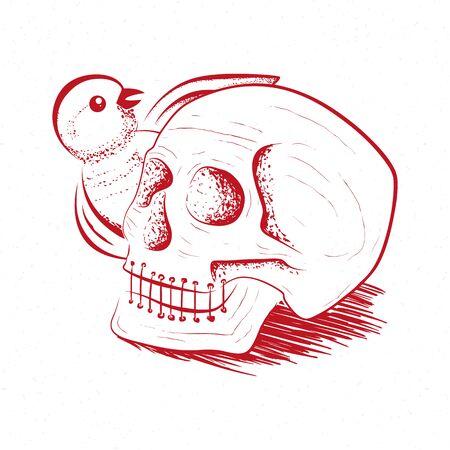 Illustration of the skull, skull sketch