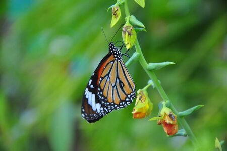a butteryfly hovers on a flowers