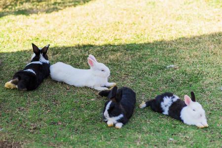 Rabbits sleep on ground floor.