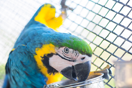 Macaw Parrot in Steel Cage.