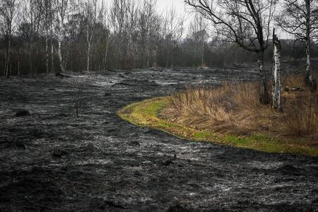 burning bush: Burnt to ash black dry grass in the forest.
