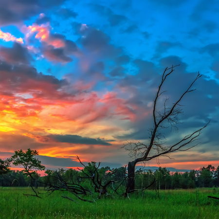 Evening landscape with a dry tree on a background of colorful sky at sunset.
