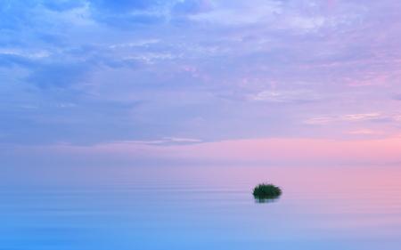 与反射在流动的水的桃红色和蓝色云彩的有薄雾的丁香海景。一只小稻草的草。白夜季节,卡累利阿,俄罗斯。软焦点,副本空间。