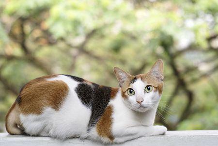 ledge: Cat on ledge