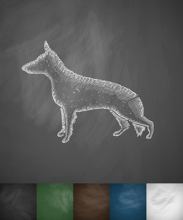 german shepherd: german shepherd icon. Hand drawn illustration on Chalkboard