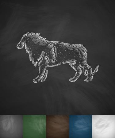 viviparous: lion icon. Hand drawn vector illustration. Chalkboard Design