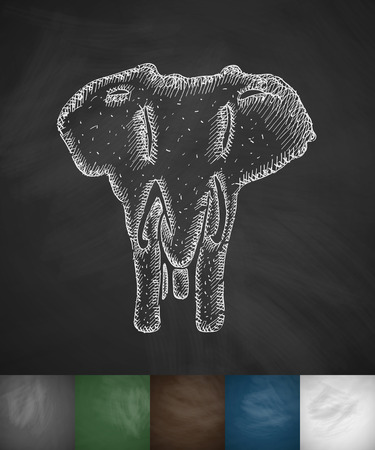 viviparous: elephant icon. Hand drawn vector illustration. Chalkboard Design