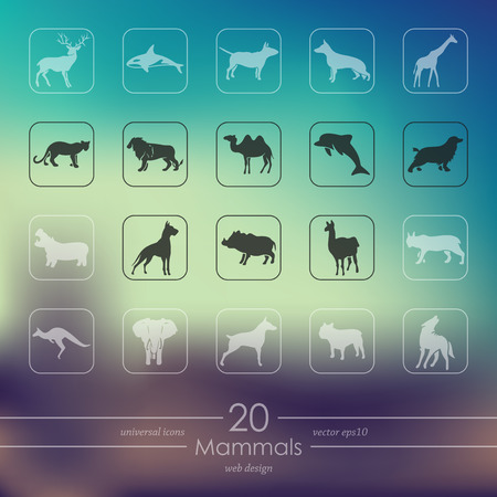 mammals: mammals modern icons for mobile interface on blurred background