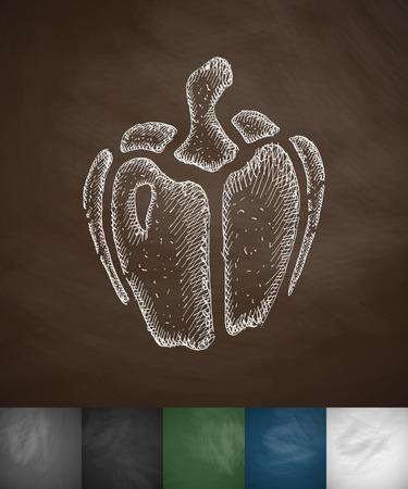 paprika: paprika icon. Hand drawn vector illustration. Chalkboard Design