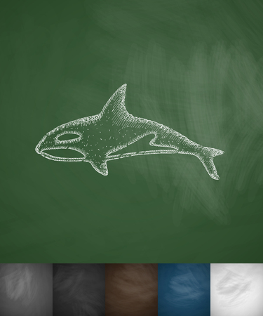 animal viviparous: whale icon. Hand drawn vector illustration. Chalkboard Design