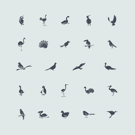 birds vector set of modern simple icons