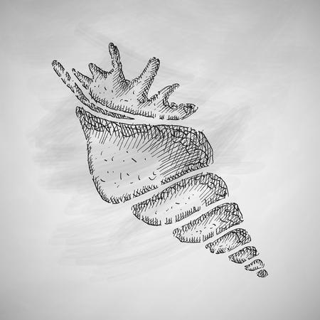 sea animals: shell icon Illustration