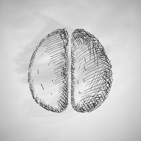 gyrus: brain icon