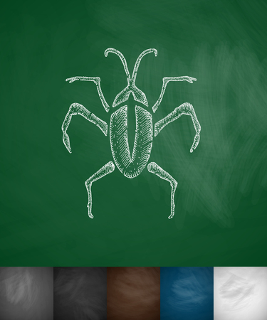proboscis: beetle icon. Hand drawn vector illustration. Chalkboard Design