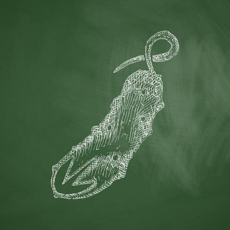 cucumber: cucumber icon Illustration