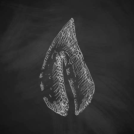 leaf: leaf icon