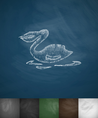 ornithologist: pelican icon. Hand drawn vector illustration. Chalkboard Design