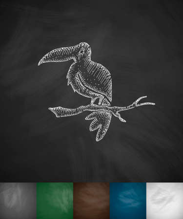 ornithologist: toucan icon. Hand drawn vector illustration. Chalkboard Design