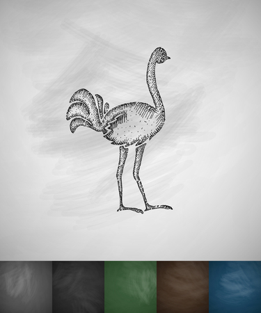 ornithologist: ostrich icon. Hand drawn vector illustration. Chalkboard Design