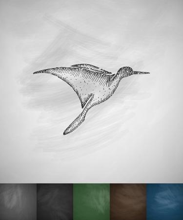 ornithologist: colibri icon. Hand drawn vector illustration. Chalkboard Design Illustration