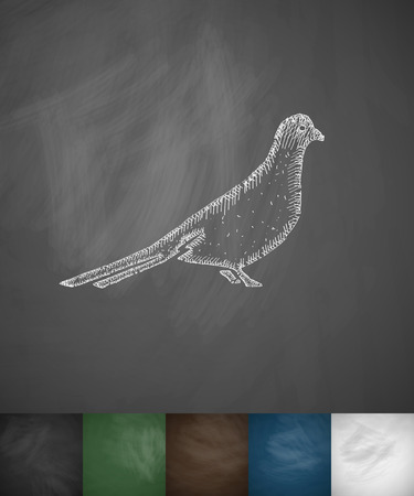 ornithologist: dove icon. Hand drawn vector illustration. Chalkboard Design