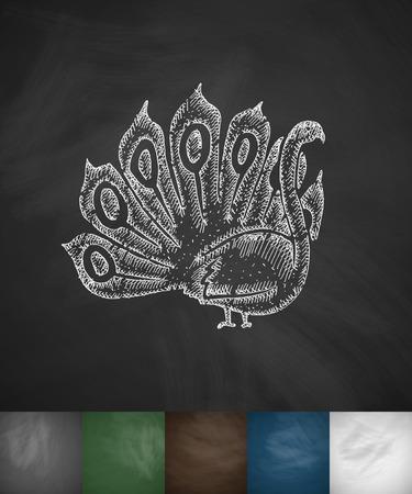 ornithologist: peacock icon. Hand drawn vector illustration. Chalkboard Design Illustration
