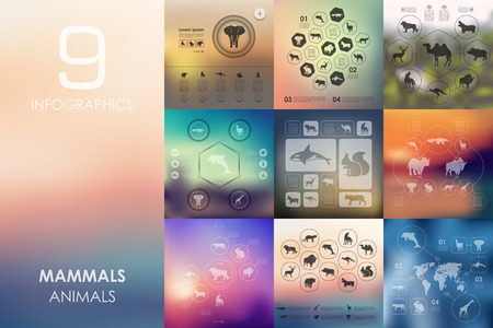 mammals: mammals vector infographics with unfocused blurred background Illustration