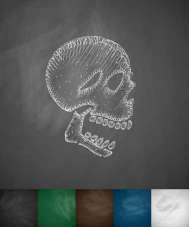 x ray image: X-rays of the skull icon. Hand drawn vector illustration. Chalkboard Design Illustration