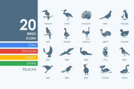 ornithologist: birds vector set of modern simple icons