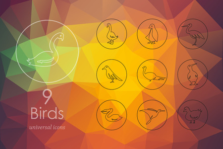 ornithologist: birds modern icons for mobile interface on blurred background