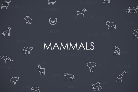 mammals: Thin Stroke Line Icons of Mammals on White Background