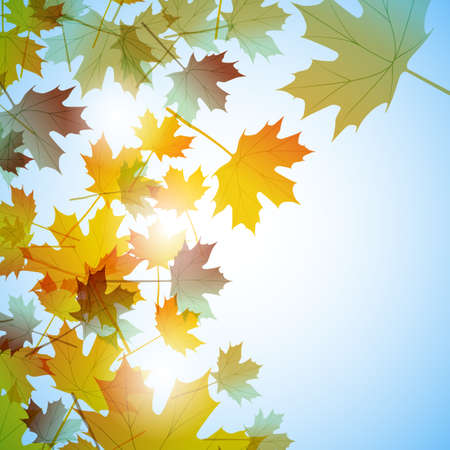 Illustration autumn still life. Maple leaves. Vector background Stock Photo