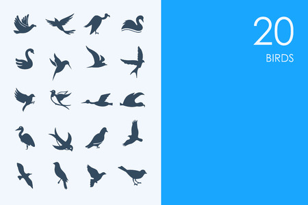 ornithologist: BLUE HAMSTER Library birds vector set of modern simple icons Illustration