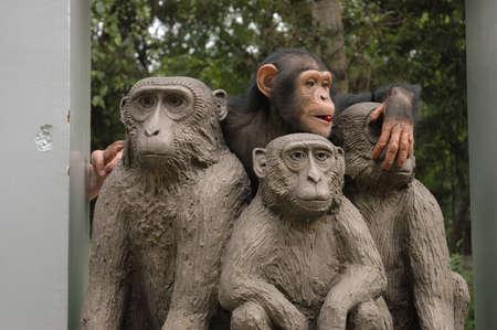 chimpances: Chimpancé jugando cerca del monumento con los monos