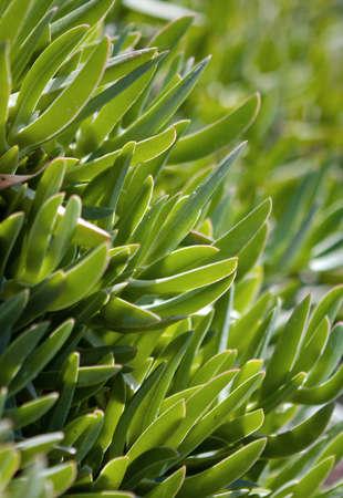 naturalist: Green grass mood