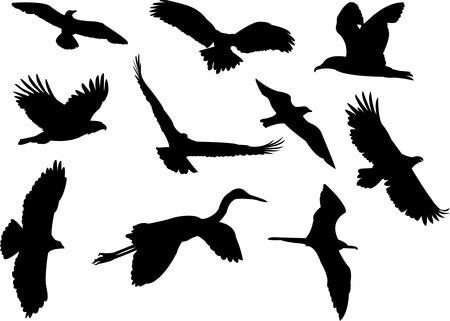 mouettes: oiseaux silhouette collection