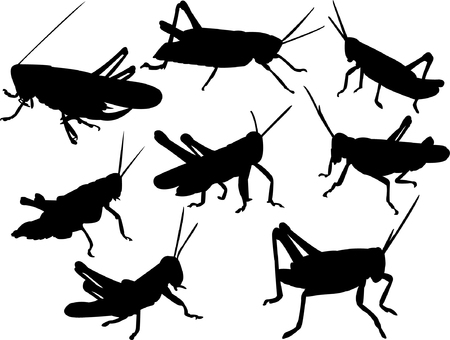 grasshoppers silhouette collection vector