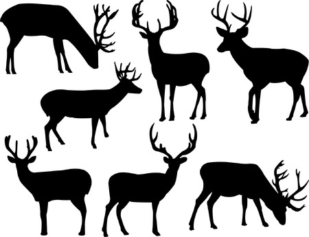 animals horned: deers silhouette collection vector
