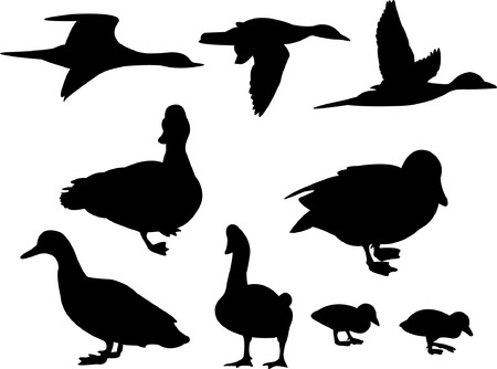 canard colvert: Canards silhouette collection vecteur  Illustration