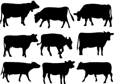 dairy cattle: cow silhouette collection