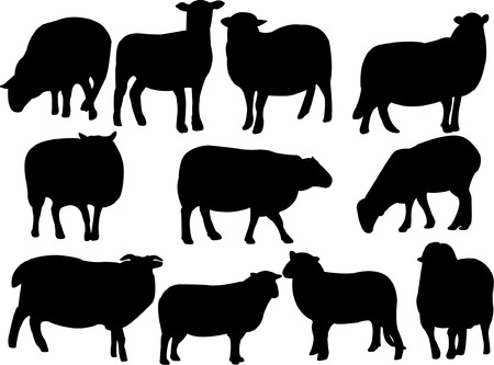 cattle grazing: sheep collection - vector