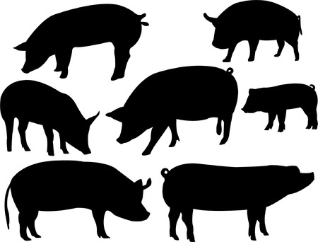 swine flu vaccination: pigs collection - vector