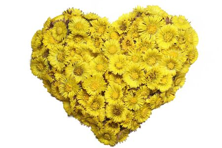 Coltsfoot's heart Stock Photo - 6816060