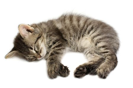 Sleeping kitten on white background Stock Photo