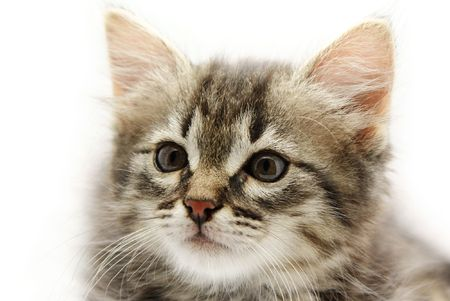 Portrait of little kitten on white background photo