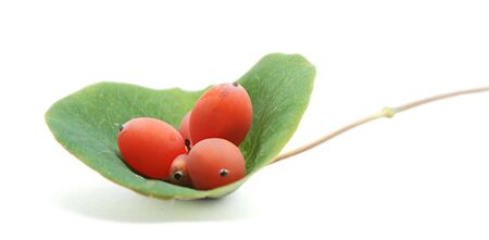 Berries and leaves of ornamental honeysuckle on white background photo